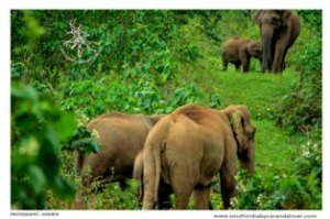 Thekkady elephant ride I car and driver