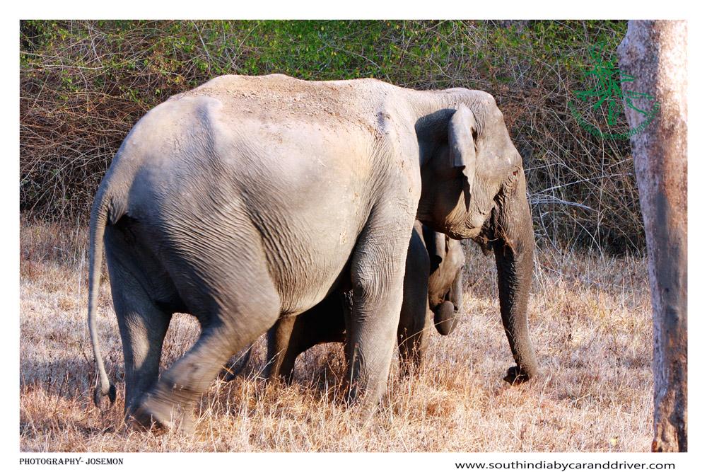 Bandipur national Tiger Reserve Karnataka