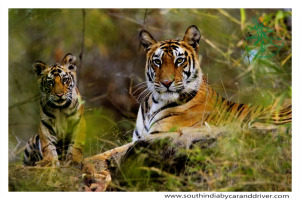 wild life of south India-car&driver-wildlife tours