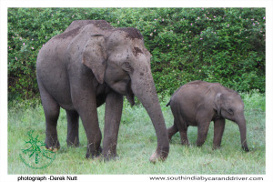 014 Wildlife Bandipur