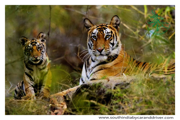 wild life of south India