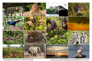 Animals in South India