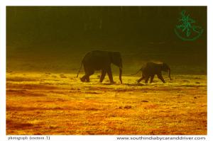 Elephants Periyar