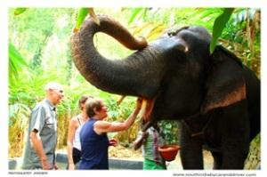 periyar wild elephant