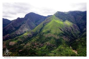 Munnar I nilgiri I Tea plantation in kerala