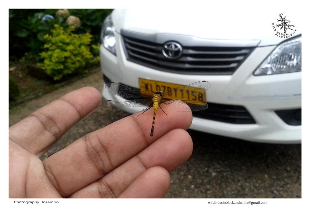 Dream cars Cochin kochi