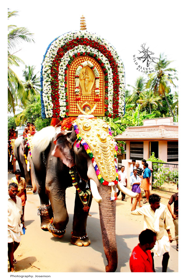 elephant festival Kerala,India