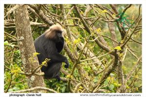 010 Wildlife Classical