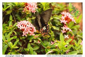40 Wildlife Butterfly